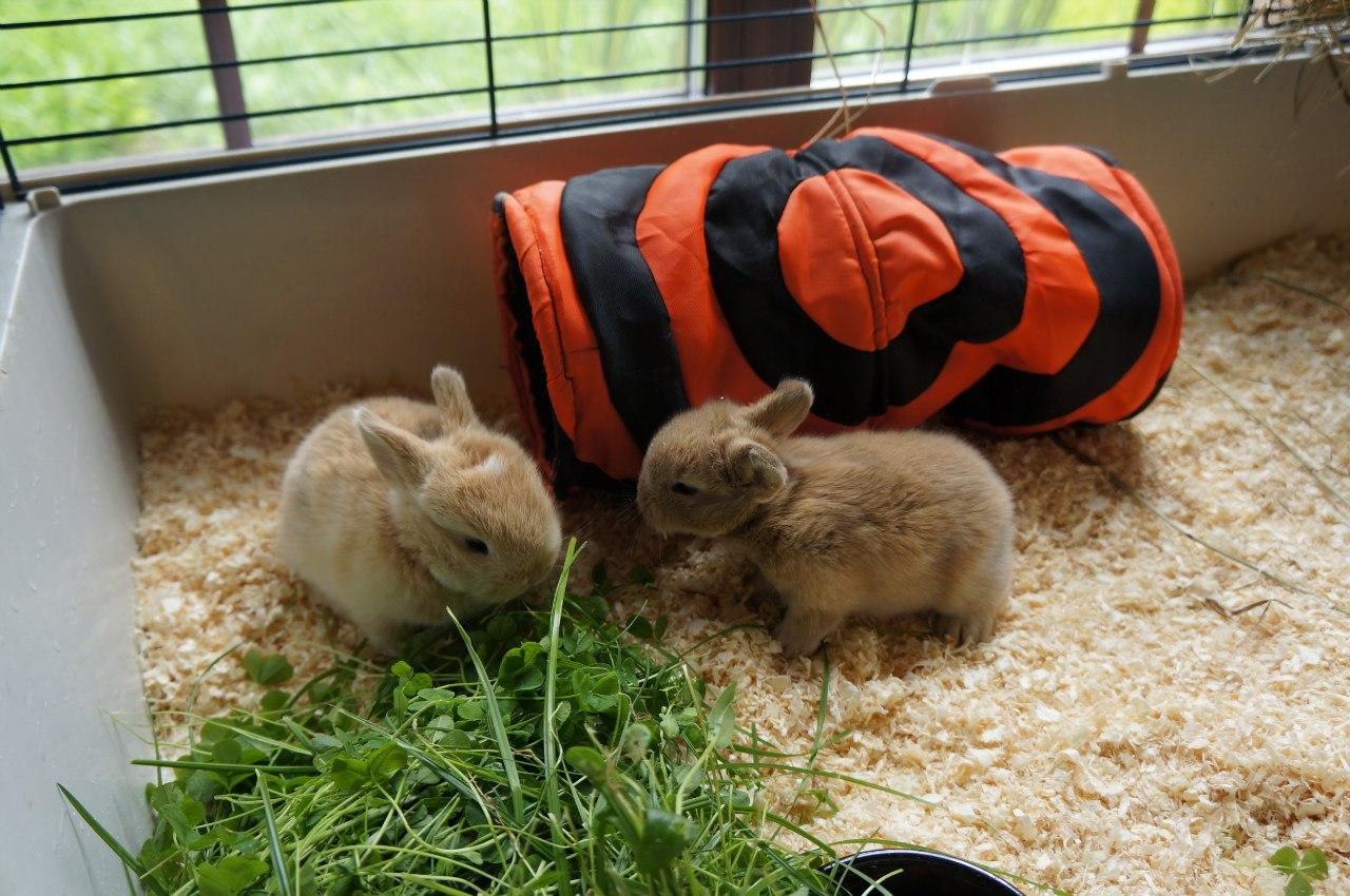 Что делать с кроликами в домашних условиях 691