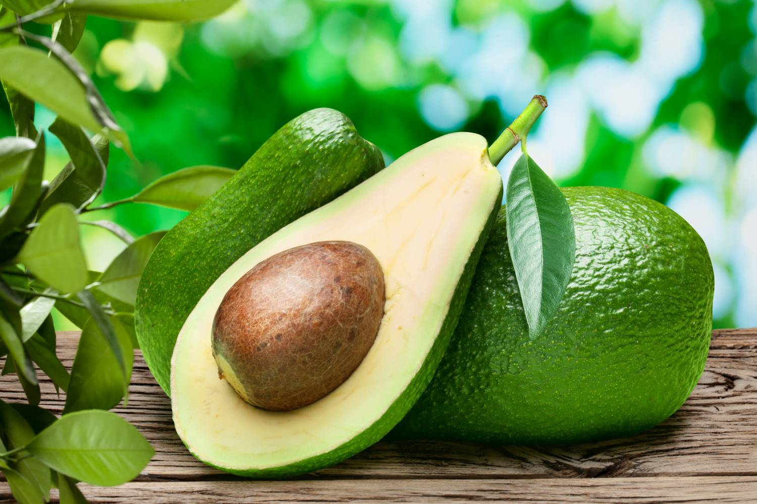 artichoke vs avocado Also foods that elevate the blood acidity, despite their low purine content, may cause an aggravation of gout some examples may be: very spicy and greasy food, coffee, alcohol, excess tea, deeply fried food and more.